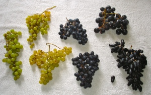 The Seven Grapes